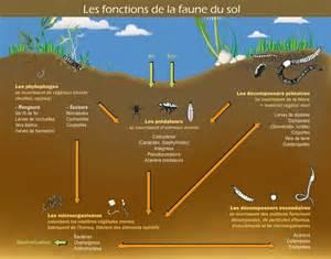 Les sols gigantesques r servoirs de biodiversit www for Plante 21 svt
